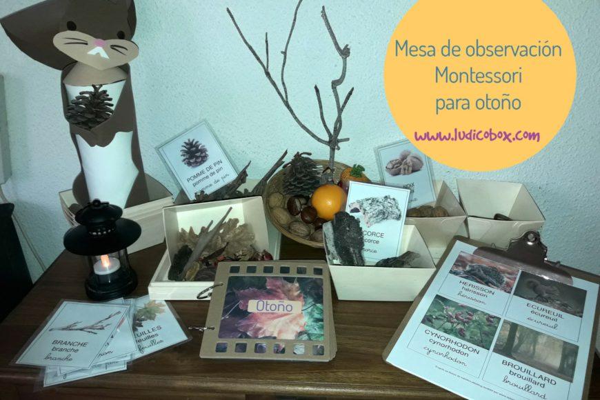 Mesa de observación Montessori para otoño