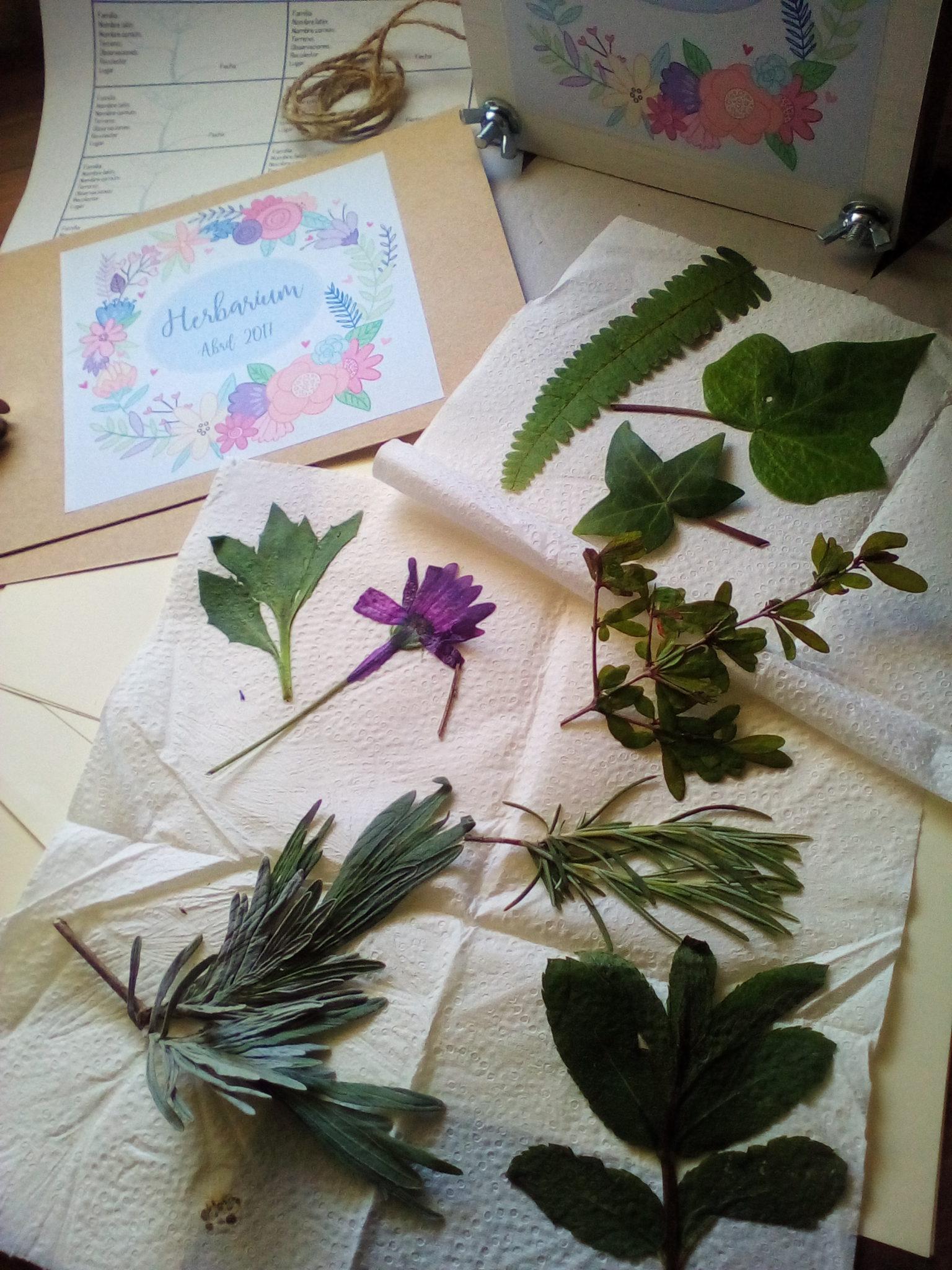 Herbario ¿ como hacer uno con niños ?