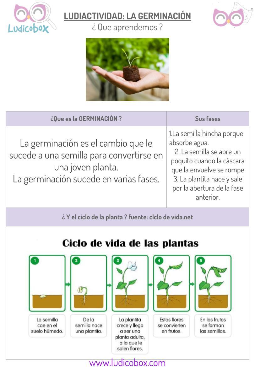 Germinación de las plantas: ¿como explicar a niños este proceso ...