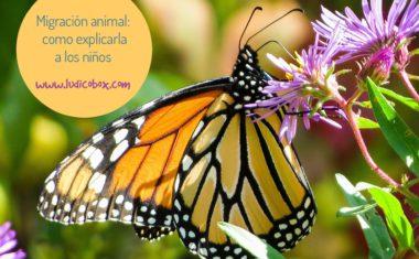 Migración animal: como explicarla a los niños